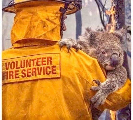 Australian Bushfires – Support Resources